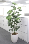光触媒 光の楽園カポック 1.8m【インテリアグリーン 人工観葉植物】(158e320)