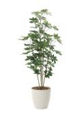 光触媒 光の楽園 カポック 高さ 1.8m 【インテリアグリーン 大型 人工観葉植物】 (158g350)