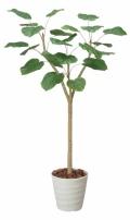 光触媒 光の楽園ウンベラータ 1.55m【インテリアグリーン 人工観葉植物】(171e280)