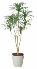 光触媒 光の楽園ユッカ 1.6m【インテリアグリーン 人工観葉植物】(173a250)