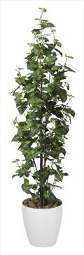 光触媒 光の楽園シンゴニューム1.7m【インテリアグリーン 人工観葉植物】(174e360)