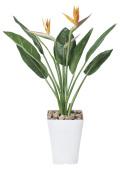 光触媒 光の楽園 ストレチアS花付 高さ 1m 【インテリアグリーン 人工観葉植物】 (195g300)