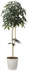 光触媒 光の楽園 デザインパキラ 高さ 1.8m 【インテリアグリーン 人工観葉植物】 (2009a300)