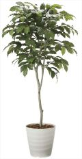 光触媒 光の楽園 コーヒーツリー 高さ 1.8m 【インテリアグリーン 大型 人工観葉植物】 (2020a580)