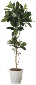 光触媒 光の楽園 ゴムの木 高さ 1.8m 【インテリアグリーン 大型 人工観葉植物】 (2024a350)