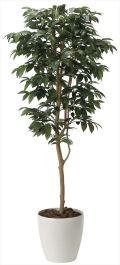 光触媒 光の楽園 アルデシア(万両) 高さ 1.6m 【インテリアグリーン 人工観葉植物】 (2034a300)