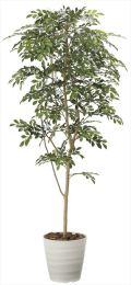光触媒 光の楽園 トネリコ 高さ 1.8m 【インテリアグリーン 大型 人工観葉植物】 (2094a350)