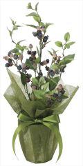 光触媒 光の楽園 ブルーベリー 【インテリアグリーン 人工観葉植物】 (2099a50)
