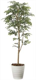 光触媒 光の楽園 トネリコ 高さ 1.6m 【インテリアグリーン 人工観葉植物】 (2107a300)