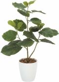 光触媒 光の楽園ウンベラータ【インテリアグリーン 人工観葉植物】(211a100)