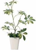 光触媒 光の楽園シェフレラ【インテリアグリーン 人工観葉植物】(212a80)