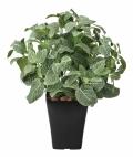 光触媒 光の楽園フィットニアM【インテリアグリーン 人工観葉植物】(226a80)