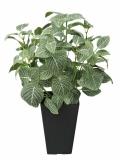 光触媒 光の楽園フィットニアS【インテリアグリーン 人工観葉植物】(230a50)