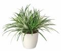 光触媒 光の楽園ドラセナミックス【インテリアグリーン 人工観葉植物】(240a70)