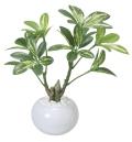 光触媒 光の楽園シェフレラポット【インテリアグリーン 人工観葉植物】(246a30)