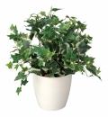 光触媒 光の楽園ホーランドアイビー【インテリアグリーン 人工観葉植物】(256a45)