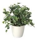 光触媒 光の楽園 ホーランドアイビー 【インテリアグリーン 人工観葉植物】 (256g50)