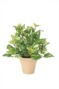 光触媒 光の楽園ポトス【インテリアグリーン 人工観葉植物】(261a25)