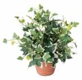 光触媒 光の楽園ホーランドアイビー【インテリアグリーン 人工観葉植物】(262a25)