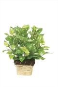 光触媒 光の楽園ミニポトス【インテリアグリーン 人工観葉植物】(265a20)