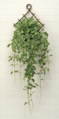 光触媒 光の楽園壁掛フィットニア【インテリアグリーン 人工観葉植物】(271a50)