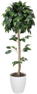 光触媒 光の楽園ベンジャミントピアリー 1.5m【インテリアグリーン 人工観葉植物】(373b240/373a220)