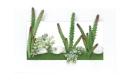 光触媒 光の楽園3Dアート多肉植物【インテリアグリーン 人工観葉植物】(392a30)
