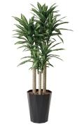 光触媒 光の楽園幸福の木 1.8m【インテリアグリーン 人工観葉植物】(401e400)