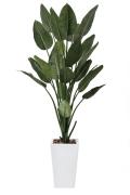 光触媒 光の楽園ストレチアW1.6m【インテリアグリーン 人工観葉植物】(409a500)