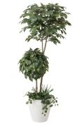 光触媒 光の楽園ベンジャミンダブルフェイス(植栽付) 高さ 1.8m【インテリアグリーン 大型 人工観葉植物】(413a500)