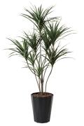 光触媒 光の楽園ユッカ1.8m【インテリアグリーン 人工観葉植物】(414a380)