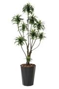 光触媒 光の楽園ドラセナコンパクタ1.6m【インテリアグリーン 人工観葉植物】(416a250)