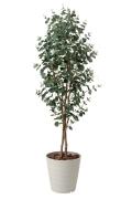 光触媒 光の楽園ユーカリ1.55m【インテリアグリーン 人工観葉植物】(417a280)