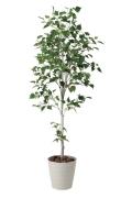 光触媒 光の楽園白樺シングル1.8m【インテリアグリーン 人工観葉植物】(421a300)