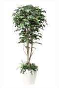 光触媒 光の楽園フィカスベンジャミン1.8植栽付m【インテリアグリーン 人工観葉植物】(508a450)