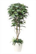 光触媒 光の楽園フィカスベンジャミン植栽付 1.8m【インテリアグリーン 人工観葉植物】(508f500)
