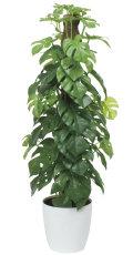 光触媒 光の楽園フレッシュポールスプリットM【インテリアグリーン 人工観葉植物】(515a80)
