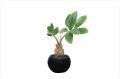 光触媒 光の楽園パキラインポット【インテリアグリーン 人工観葉植物】(520a25)