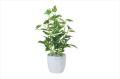 光触媒 光の楽園ミニポトスポット【インテリアグリーン 人工観葉植物】(523a25)