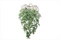 光触媒 光の楽園壁掛ピレア【インテリアグリーン 人工観葉植物】(527a50)