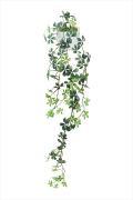 光触媒 光の楽園壁掛シュガーバイン【インテリアグリーン 人工観葉植物】(528e60)