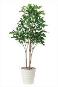 <光触媒加工なし>光の楽園ローズウッドツリー1.8(530e480)