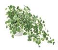 光触媒 光の楽園 プミラ 【インテリアグリーン 人工観葉植物】 (557g60)