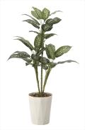 光触媒 光の楽園ディフェンバキア90【インテリアグリーン 人工観葉植物】(619a120)