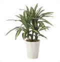 光触媒 光の楽園幸福の木70【インテリアグリーン 人工観葉植物】(628a130)