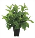 光触媒 光の楽園アクバL【インテリアグリーン 人工観葉植物】(632a35)