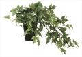 光触媒 光の楽園メイプルアイビー【インテリアグリーン 人工観葉植物】(635a60)