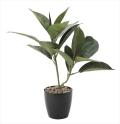 光触媒 光の楽園ゴムの木【インテリアグリーン 人工観葉植物】(637a50)