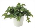 光触媒 光の楽園フレッシュアイビ-【インテリアグリーン 人工観葉植物】(639a50)