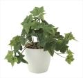 光触媒 光の楽園フレッシュアイビーS【インテリアグリーン 人工観葉植物】(640a35)